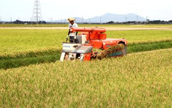 無農薬栽培の新潟県産コシヒカリ