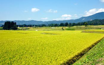 山間部に段々と田が並ぶ、眺めも絶景な『棚田』