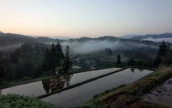 豊富な雪解け水と、昼夜の寒暖差がお米を強くたくましく
