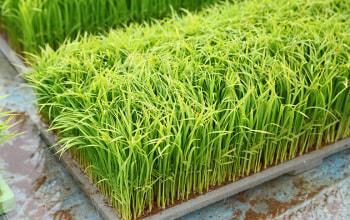 秋の収穫に向け丁寧に米作りを行う
