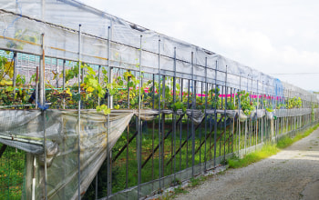 Nature Farm 渡辺果樹園