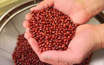 北海道産小豆を使用して自家製餡を作る
