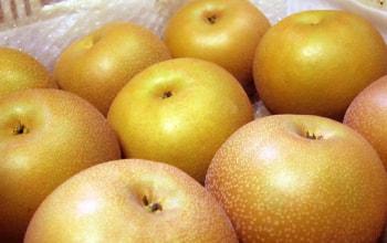 収穫後の梨。綺麗なもののみを選別しています。
