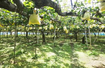 梨の宇野農園