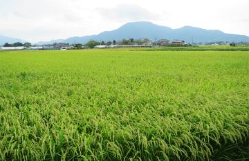 藤田農園(藤田一雄)