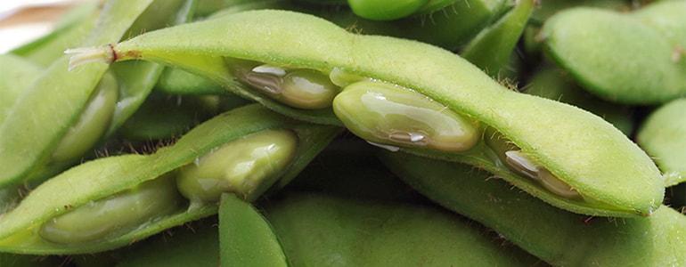 ピカリ茶豆