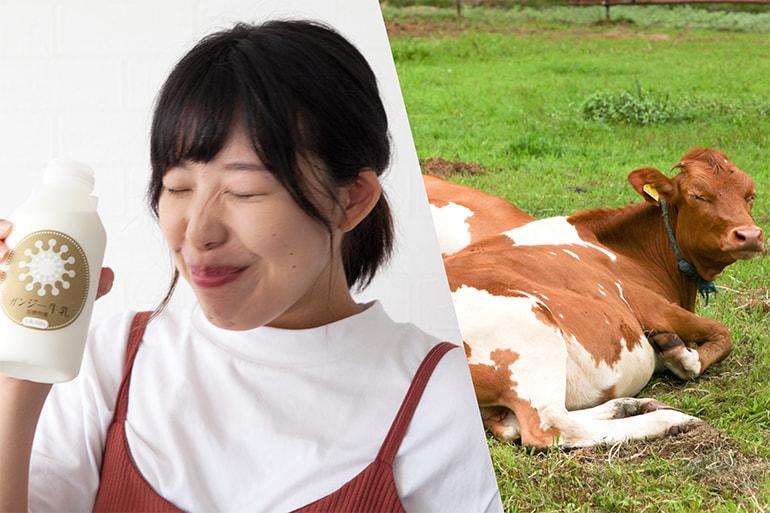 ガンジー牛乳 – 加勢牧場