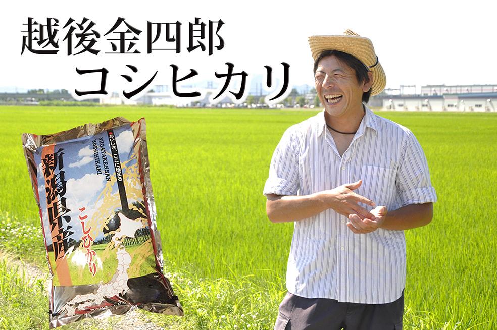 令和2年度米 新潟産 越後金四郎コシヒカリ(特別栽培米)