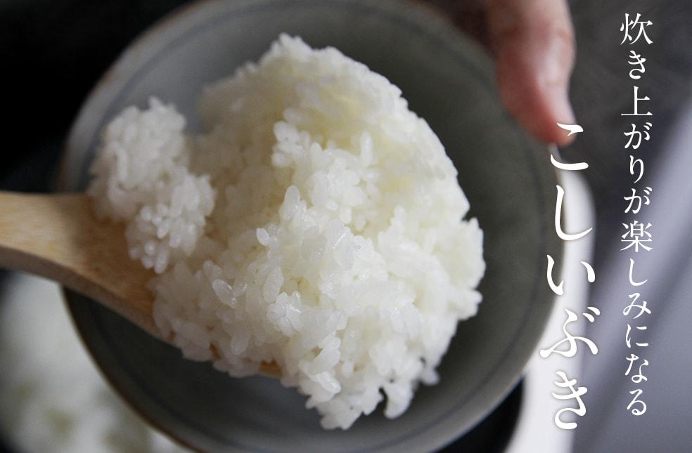 令和2年度米 炊き上がりが楽しみになるこしいぶき