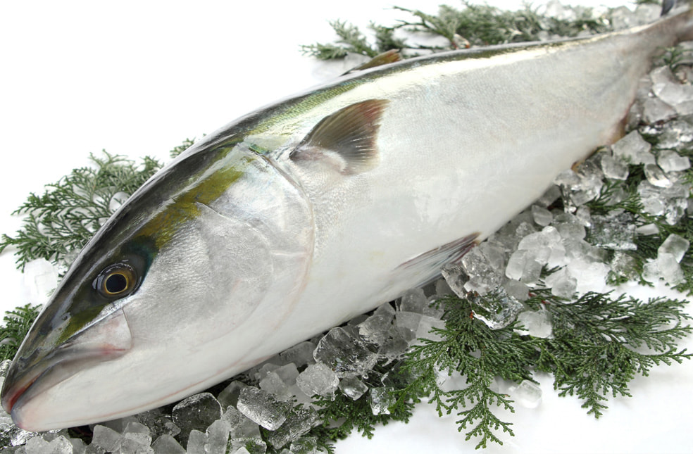 予約注文:一本釣り 天然寒ブリ(一尾丸ごと)