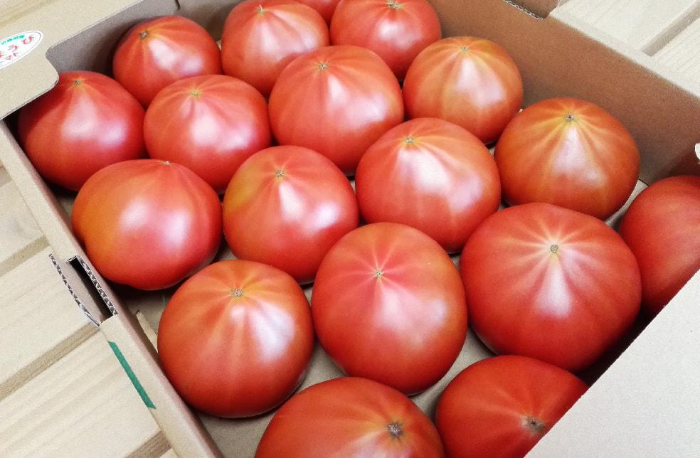 新潟産大玉トマト