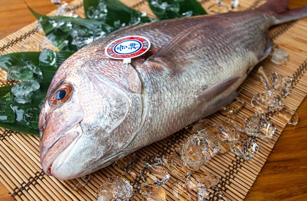 「寺神」神経〆真鯛