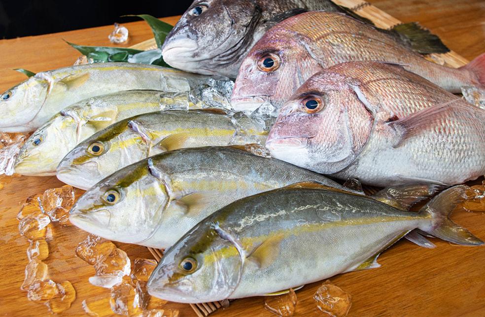 寺泊産 真鯛の鮮魚セット