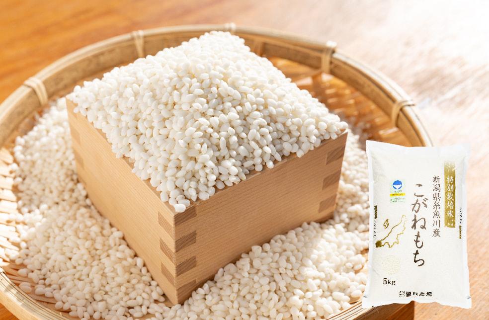 令和3年度米 糸魚川産こがねもち(もち米・特別栽培米)
