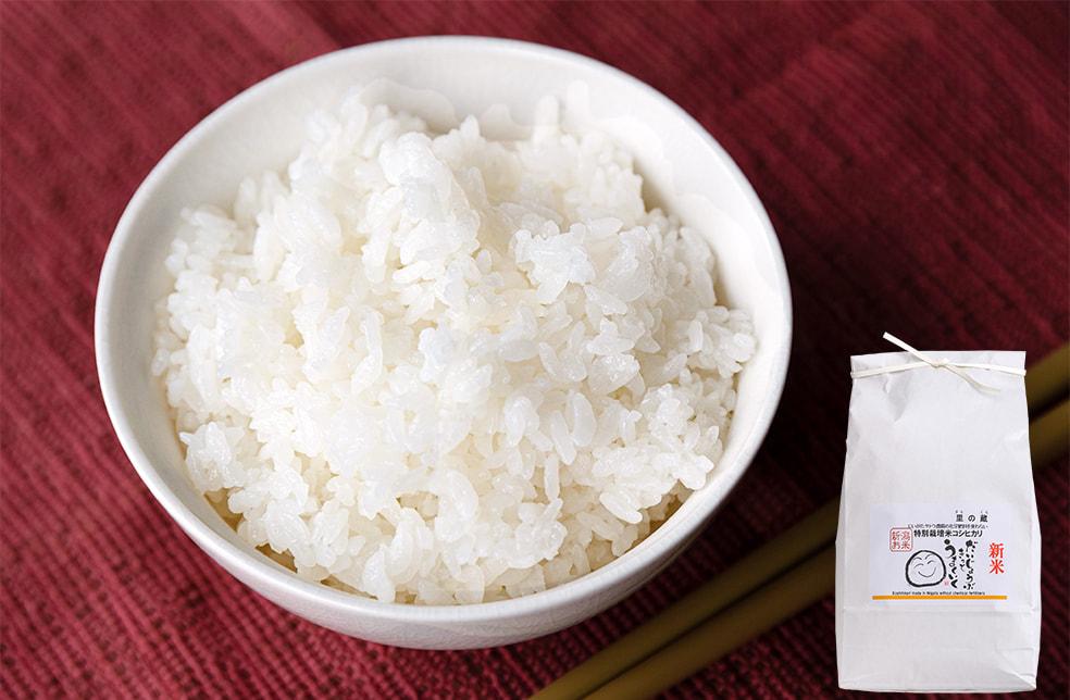 令和3年度米 新潟県産コシヒカリ(特別栽培・従来品種)
