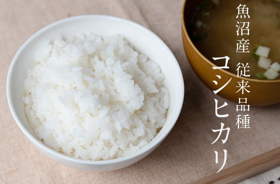 令和元年度米 魚沼産コシヒカリ(従来品種)