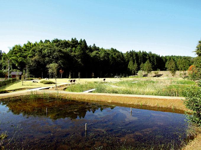 刈羽新池自然観察公園