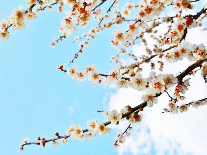 木や花の名所