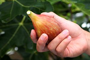 3.ベストな収穫のタイミング