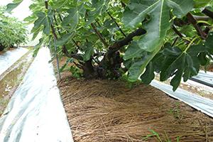 2.根に栄養を与える有機質肥料