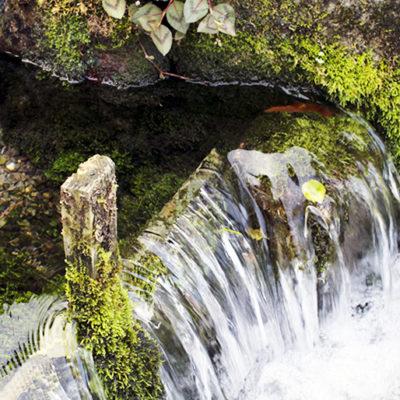 お米の名産地「魚沼」と同じ山の水で栽培