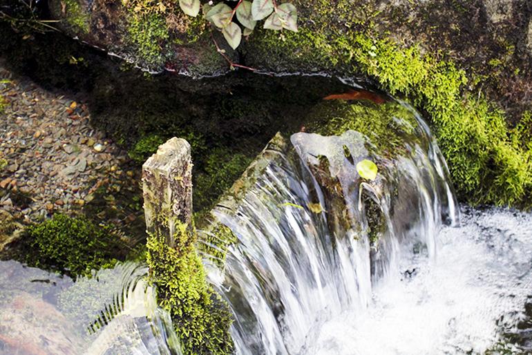 お米の名産地「魚沼」と同じ山の水で育てます