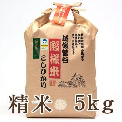 越後菅谷殿様米コシヒカリ(特別栽培米)精米5kg