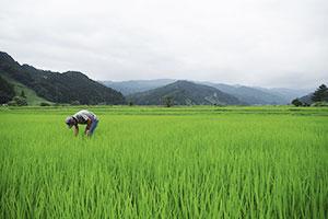 3.田んぼごとに合わせた施肥管理
