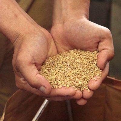 食物繊維とビタミンEが豊富な玄米
