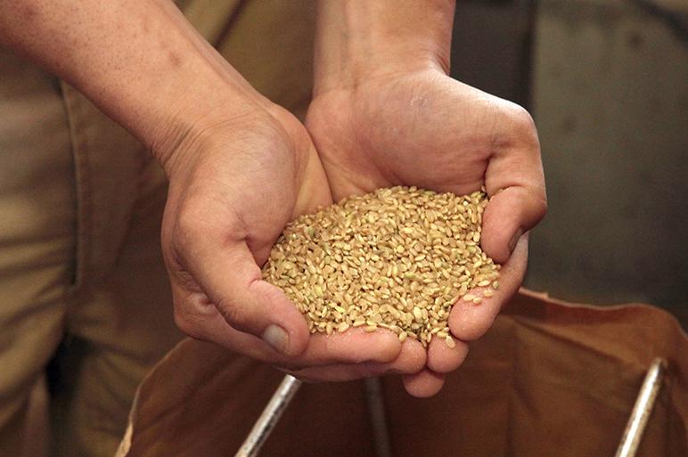 普段の生活に玄米を取り入れてみませんか?