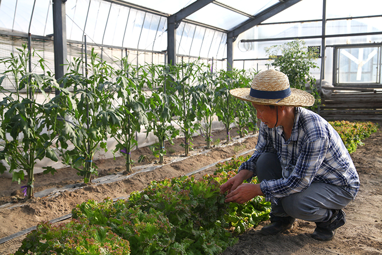 3.減農薬と有機質肥料使用で安全性にも配慮