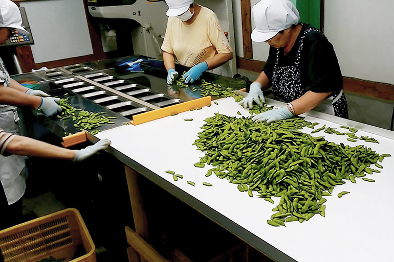 3.枝豆の選別は一つ一つ人の手で