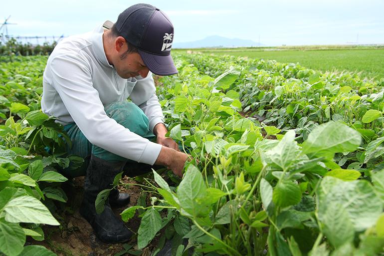 1.土壌の診断を行い、土を健康に