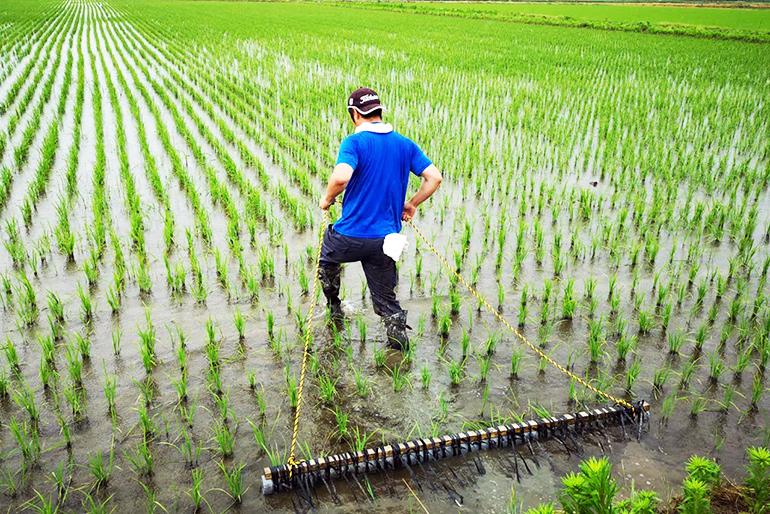 稲の持つ力を引き出す栽培