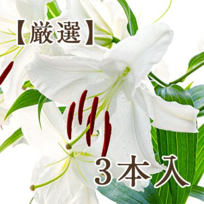 【厳選】十日町産 カサブランカ「雪華美」3本入り