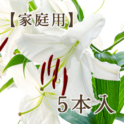 【家庭用】十日町産 カサブランカ「雪華美」5本入り