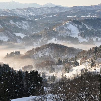 栄養たっぷりの雪下にんじんを育てる高地栽培