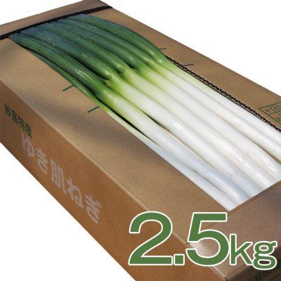 ゆき肌ねぎ 2.5kg(20~25本)
