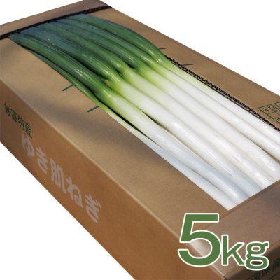 ゆき肌ねぎ 5kg(40~45本)