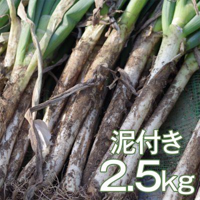 ゆき肌ねぎ(泥付き) 2.5kg(11~15本)