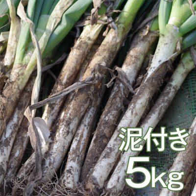 ゆき肌ねぎ(泥付き) 5kg(23~26本)
