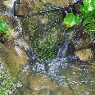 清らかな山水が流れる池谷集落