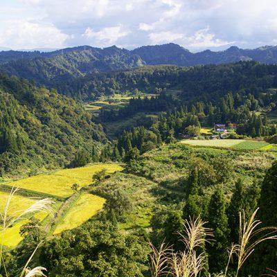 山間地特有の「棚田」で栽培