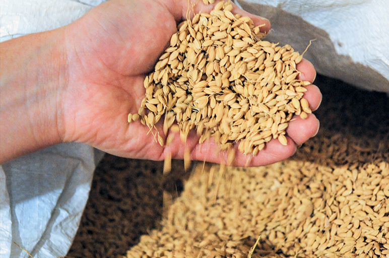 お米も生鮮食品。モミ殻の状態で鮮度を保つ