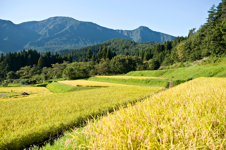 減減農法の特別栽培米