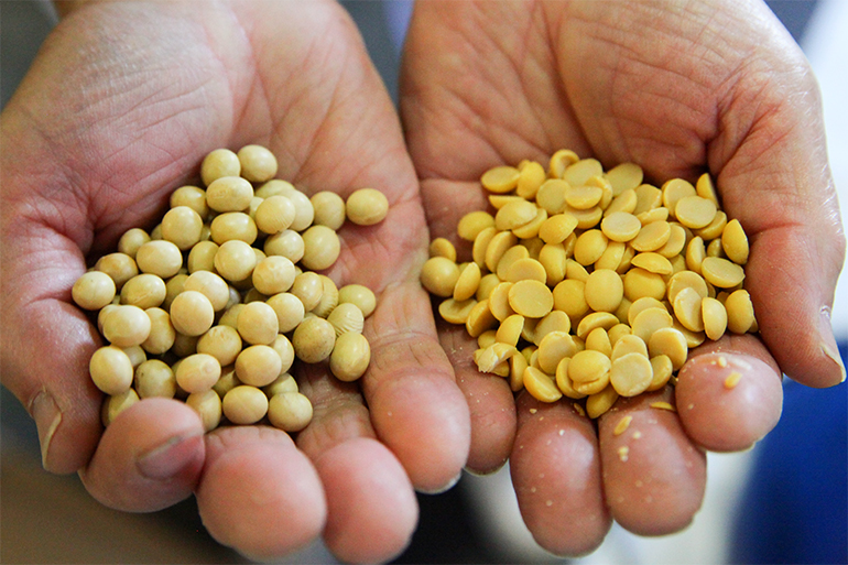 国産大豆、自家製麹で作られる極上味噌「匠の味」