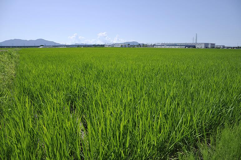 有機肥料・減農薬!永塚農園こだわりの特別栽培米
