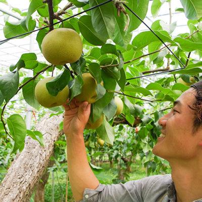 各品種にあわせた最適なタイミングで収穫