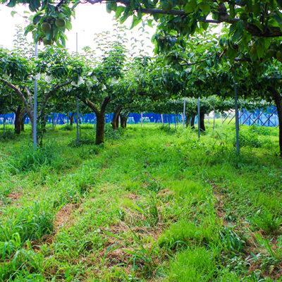美味しい秘密は、徹底した肥培管理