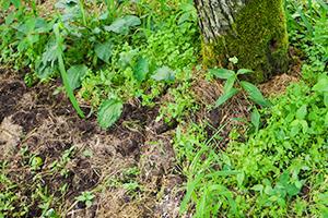 1.栄養バランスのとれた柔らかい土を作る